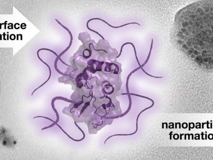 """New paper in JACS: """"Nanoparticle Assembly of Surface-Modified Proteins"""""""