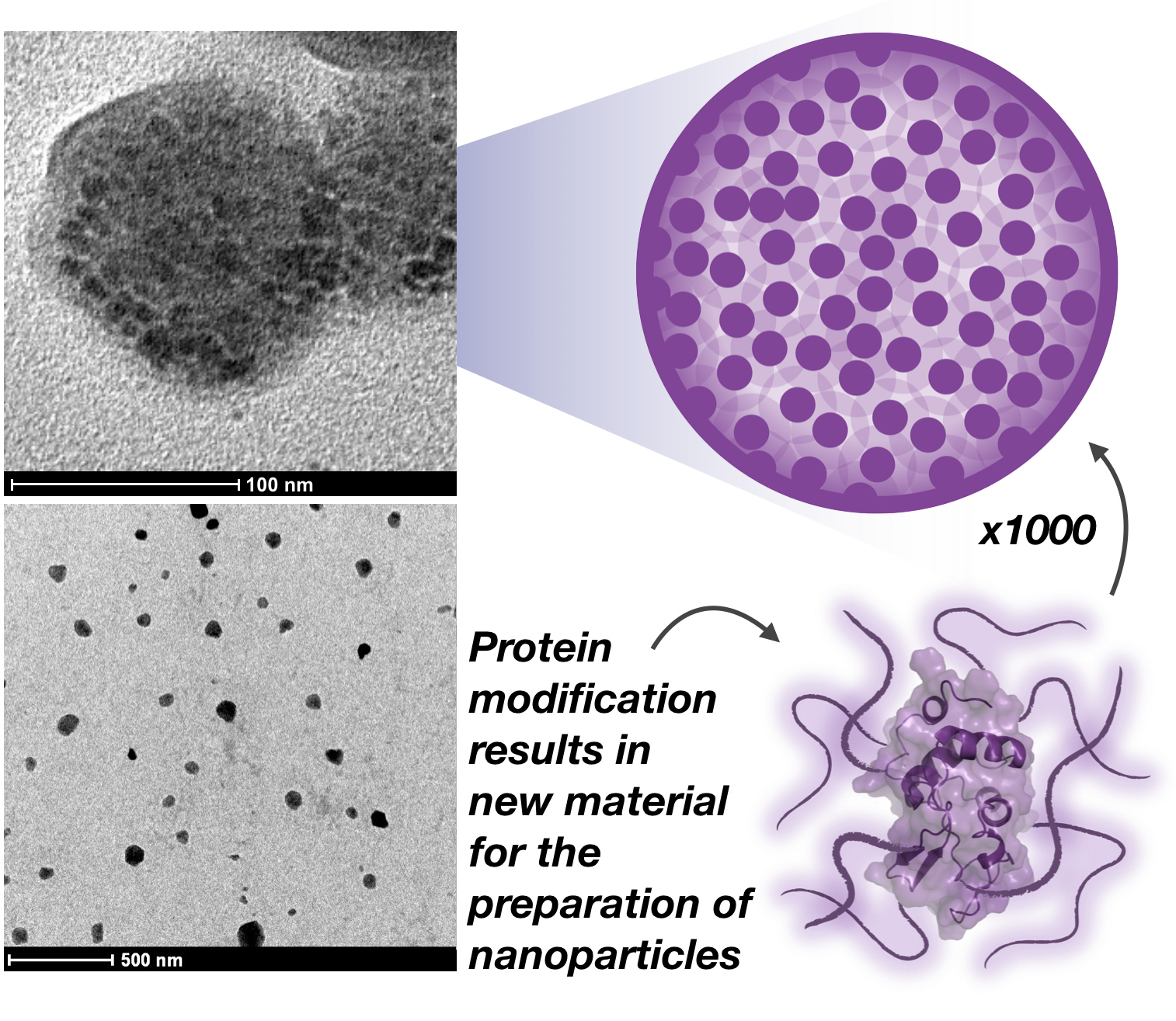 protein nanoparticles biopolymer Wichlab Peter Wich