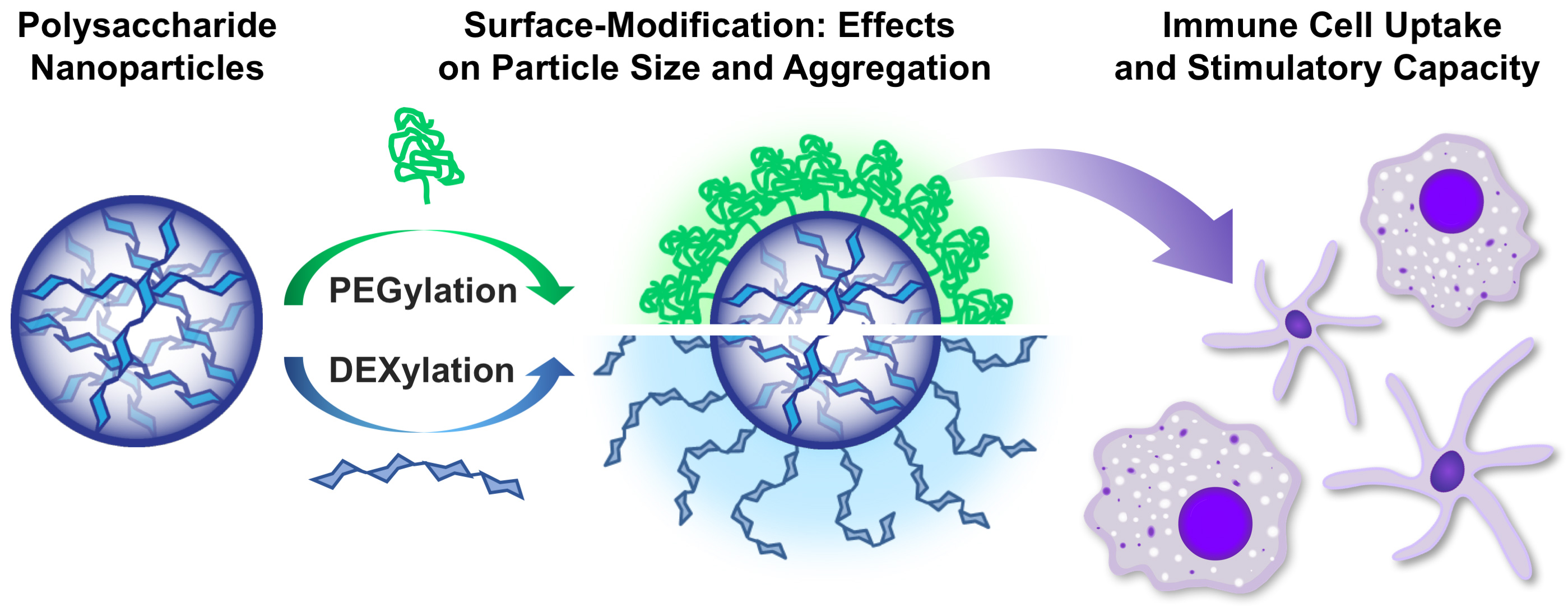 Surface Modification of Polysaccharide-Based Nanoparticles