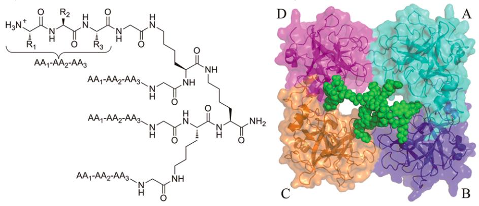 QianQian Biomolecular Chemistry Tryptase
