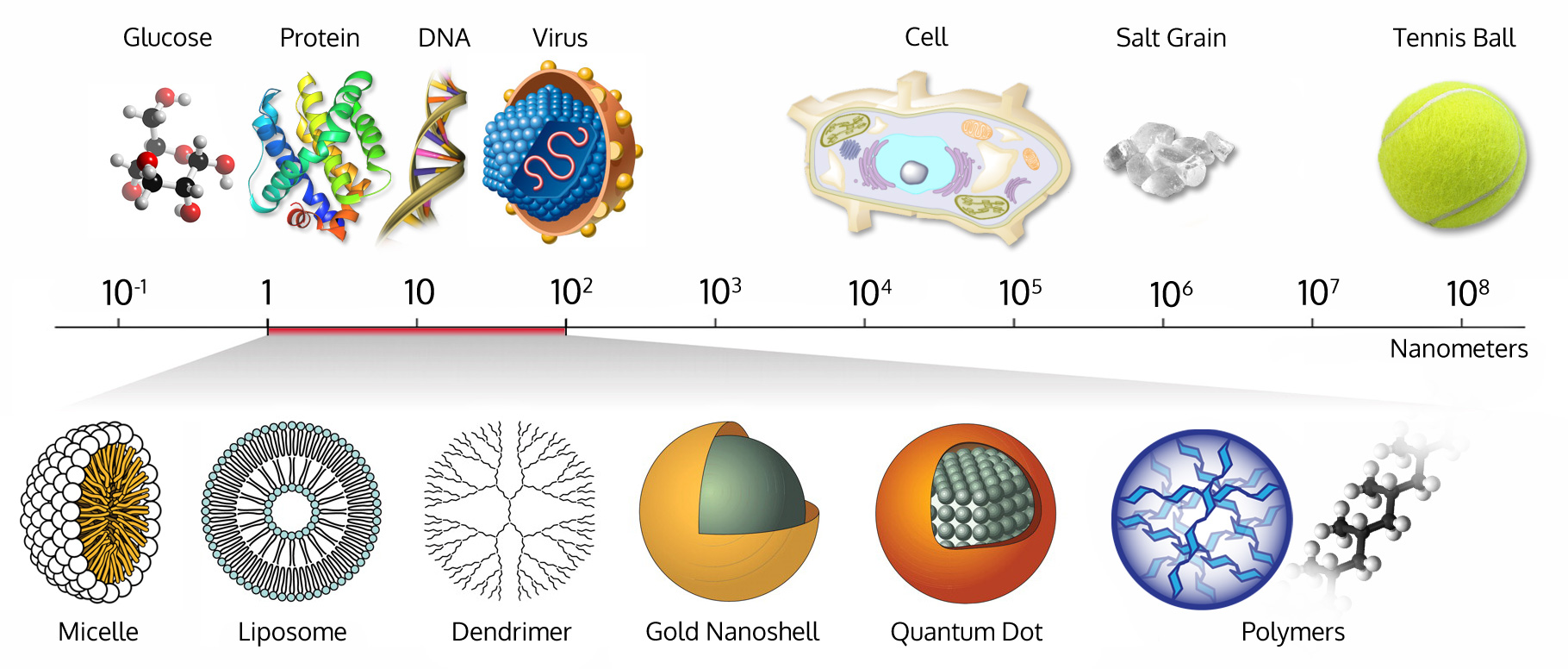 nanometer scale comparison nanoparticle size comparison nanotechnology chart ruler