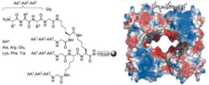 Surface Recognition and Inhibition of β-Tryptase by Tetravalent Peptide Ligands