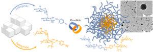 Biomacromolecules Dextran Micelles Nanoparticle Benjamin Breitenbach Ira Schmid Peter Wich