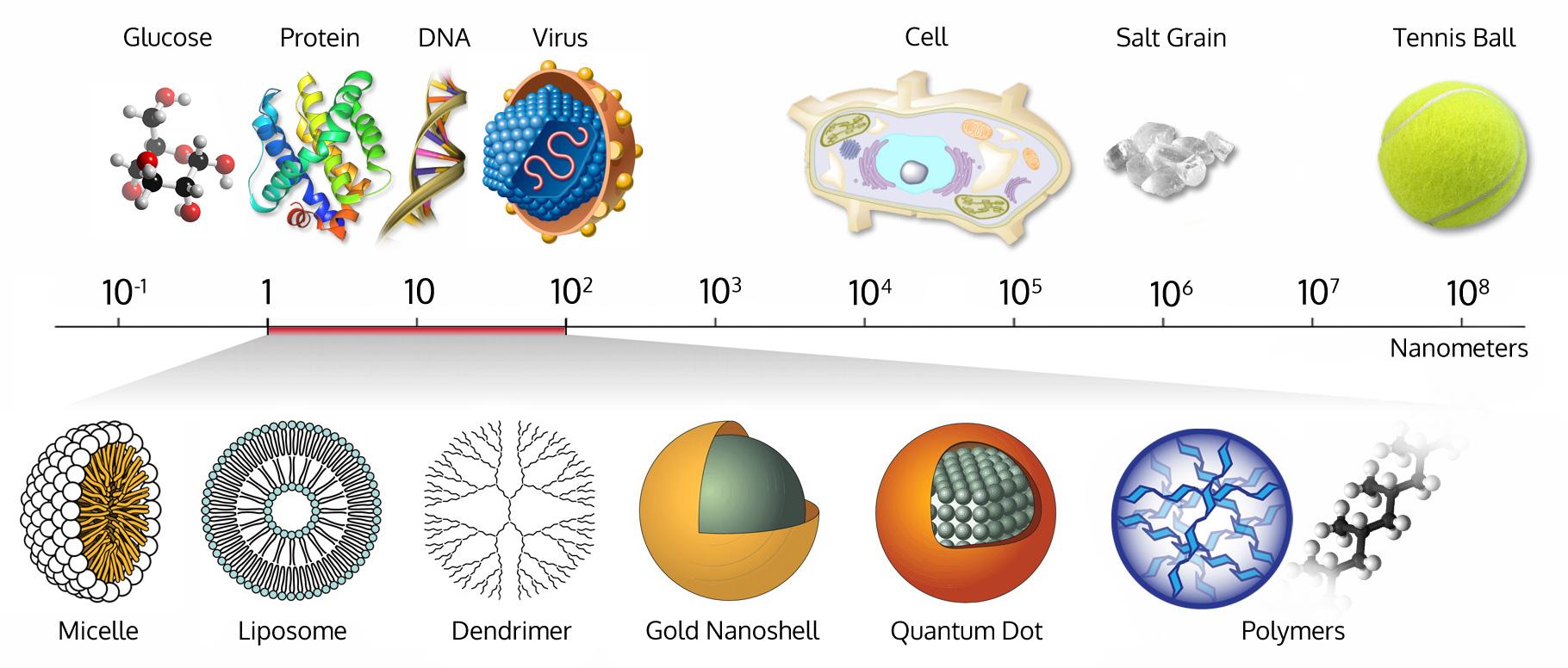 size comparison bio nanoparticles nanometer scale comparison