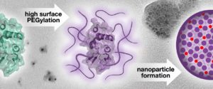 Wichlab Nanoparticle JACS protein drug delivery