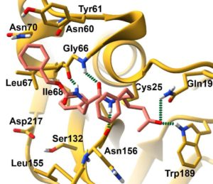 Peptide-based Michael Acceptors Targeting Rhodesain and Falcipain-2 for the Treatment of Neglected Tropical Diseases