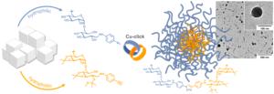 Biomacromolecules Dextran Micelles Micellar Nanoparticle Benjamin Breitenbach Ira Schmid Peter Wich