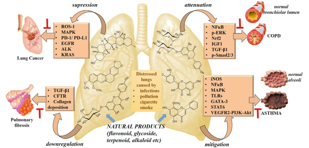 "Plants derived therapeutic strategies targeting chronic respiratory diseases: Chemical and Immunological Perspective"" P. Prasher, M. Sharma, M. Mehta, S. Satija, K. R. Paudel, D. K. Chellappan, H. Dureja, G. Gupta, M. M. Tambuwala, P. Negi, P. R. Wich, N. Hansbro, P. M Hansbro, K. Dua, Chem.-Biol. Interact., 2020"