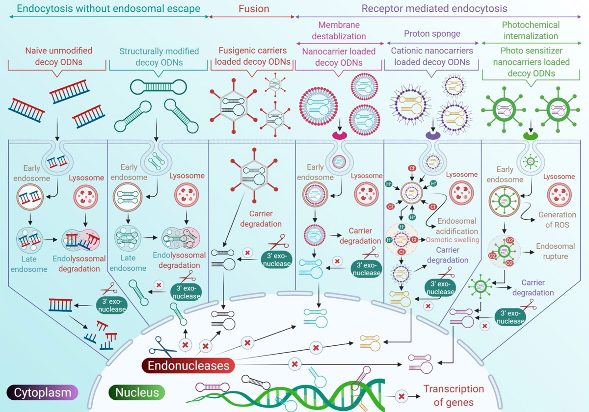 Recent trends of NFκB decoy oligodeoxynucleotide-based nanotherapeutics in lung diseases